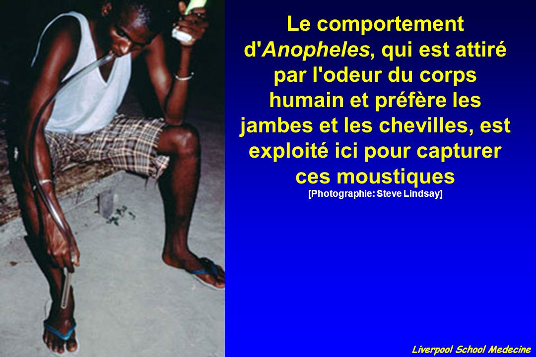 Le comportement d Anopheles, qui est attiré par l odeur du corps humain et préfère les jambes et les chevilles, est exploité ici pour capturer ces moustiques [Photographie: Steve Lindsay]